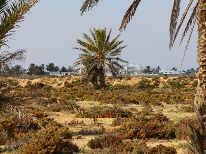 Ptit week end a Djerba ... P1060024