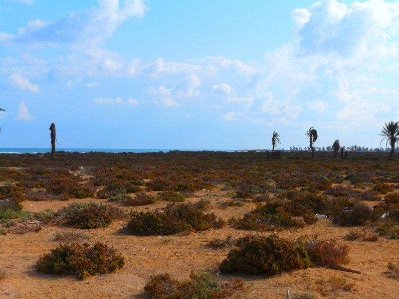 Ptit week end a Djerba ... P1060025