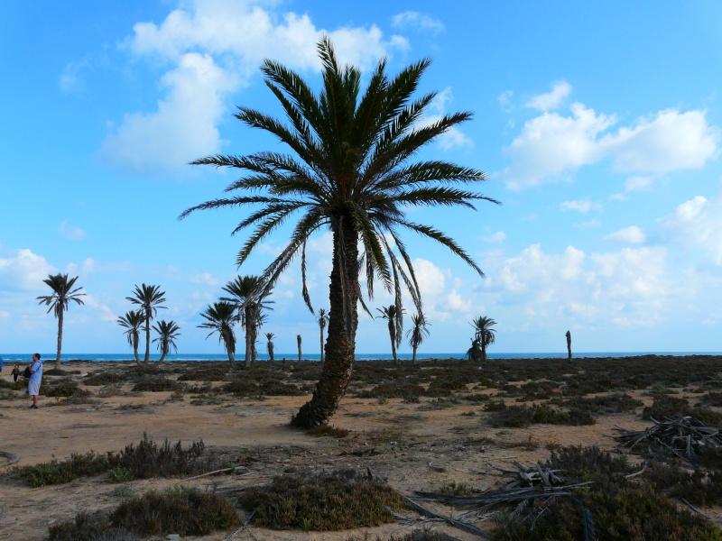 Ptit week end a Djerba ... P1060026