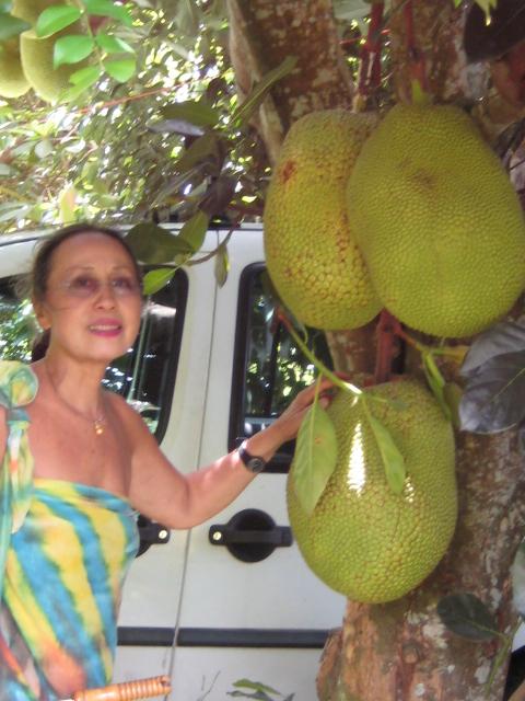 Durio zibethinus , durian ou durion Artoca10