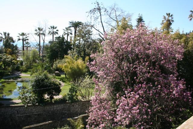 Fête aux plantes rares, Saint Priest 69 Bassin10