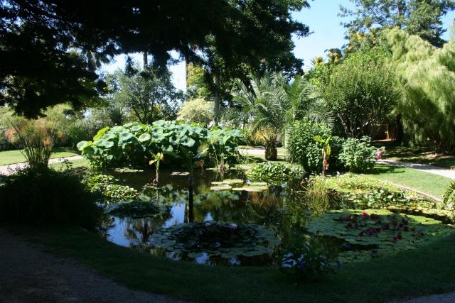 Fête aux plantes rares, Saint Priest 69 Bassin11