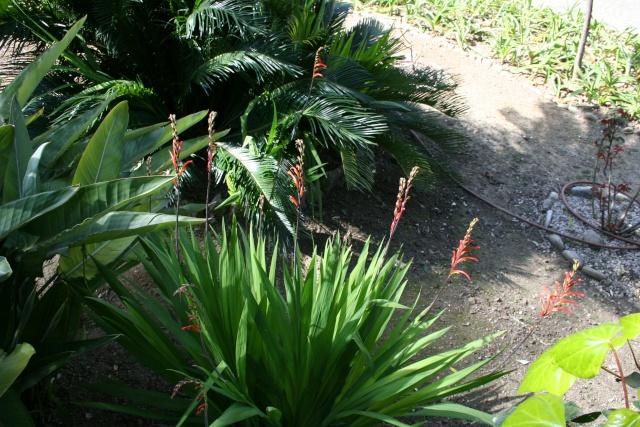 Autres plantes rencontrées dans la petite ballade moto de ce matin Chasma10