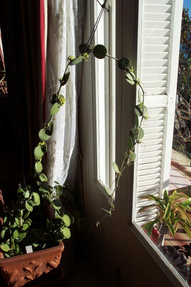 [Euphorbia balsamifera]IDENTIFICATION Curcub10