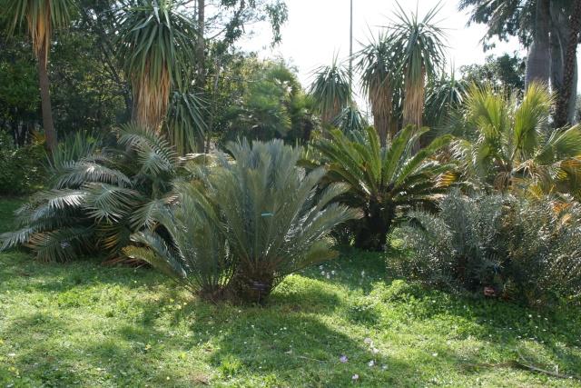Villa Thuret d'Antibes Cycada10