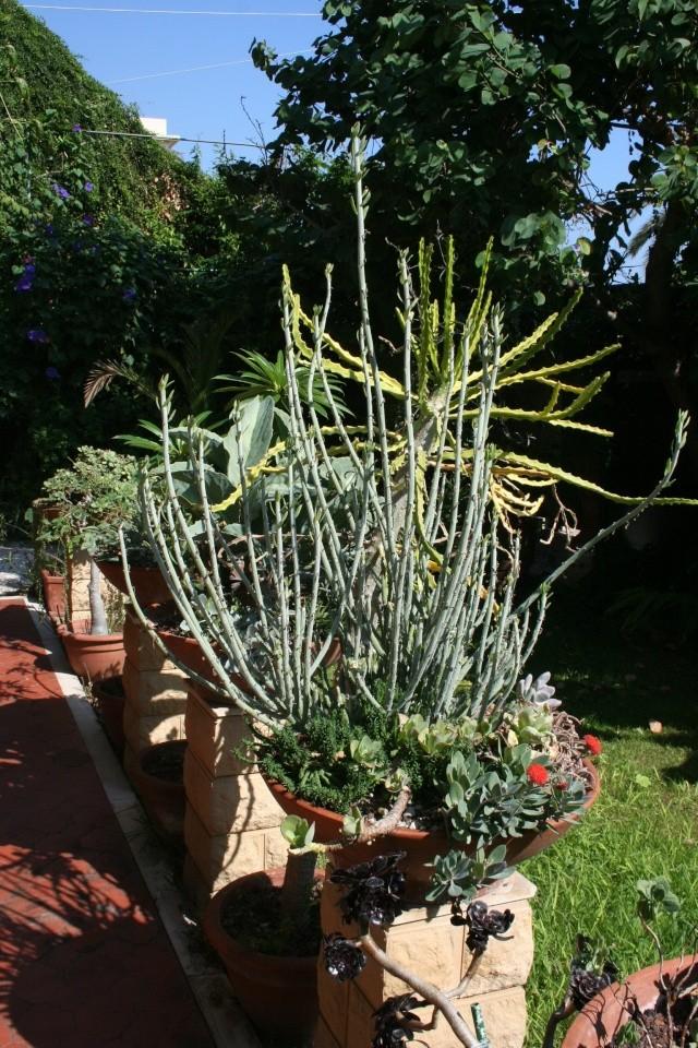 Terrasse aux succulents en cette fin septembre Euphor17