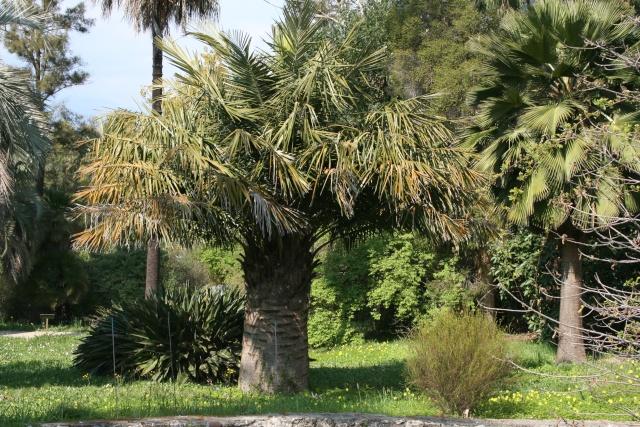 La Villa Thuret d'Antibes Jubea_10