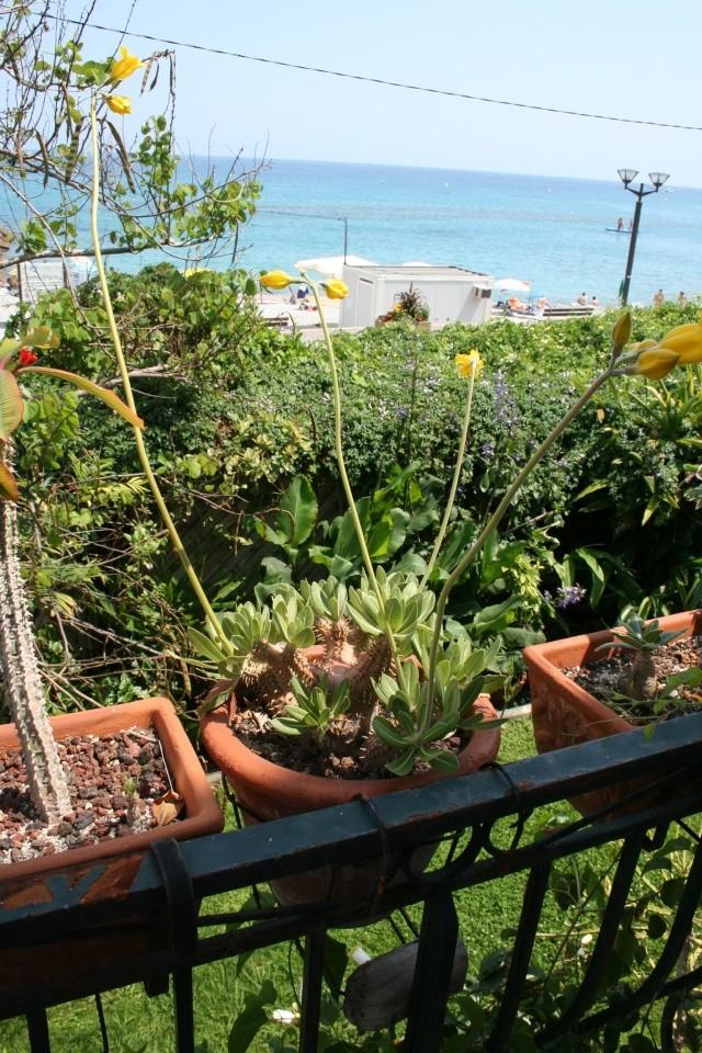 Pachypodium horobense, une superbe floraison Pachyp16