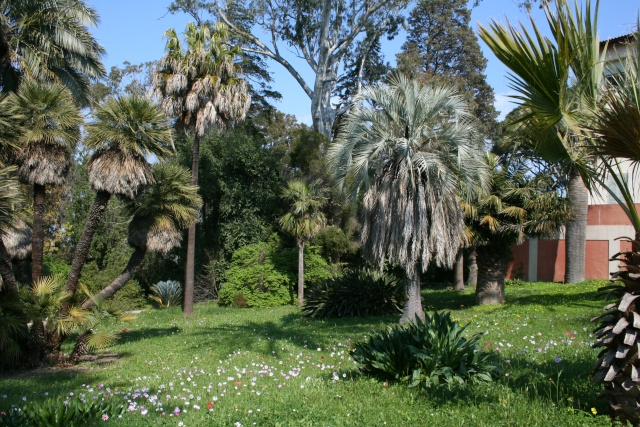 Villa Thuret d'Antibes Palmie10