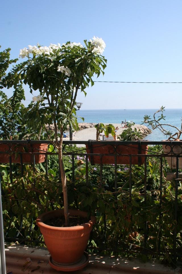 Terrasse aux succulents en cette fin septembre Plumer28