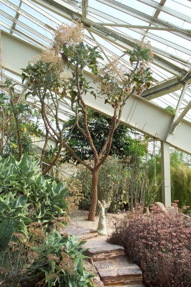 Cactées et plantes grasses du parc Phénix Serre_11