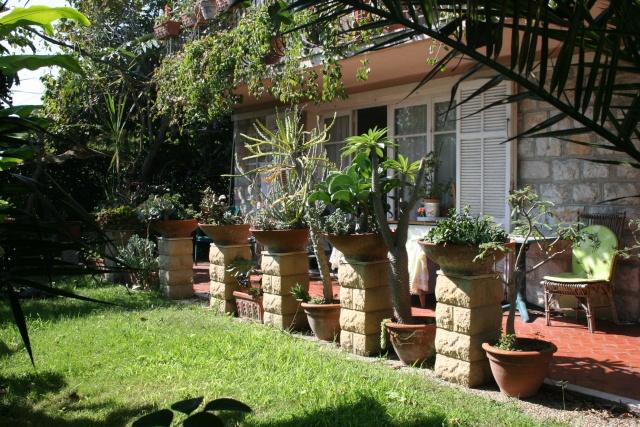 Terrasse aux succulents en cette fin septembre Terras15