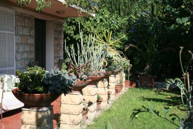 Terrasse aux succulents en cette fin septembre Terras16