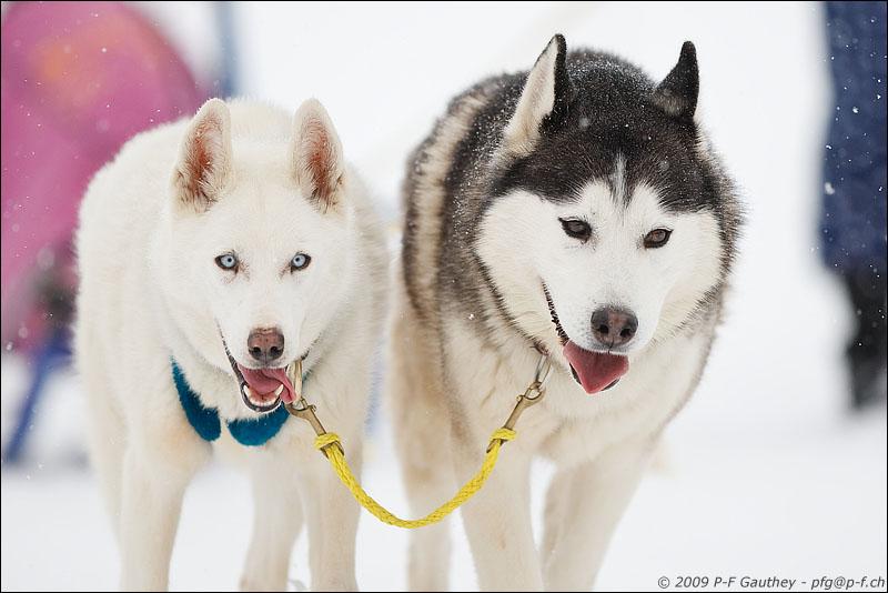Nos loups grandissent, postez nous vos photos - Page 2 09012410