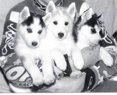 Nos loups grandissent, postez nous vos photos - Page 2 55305310