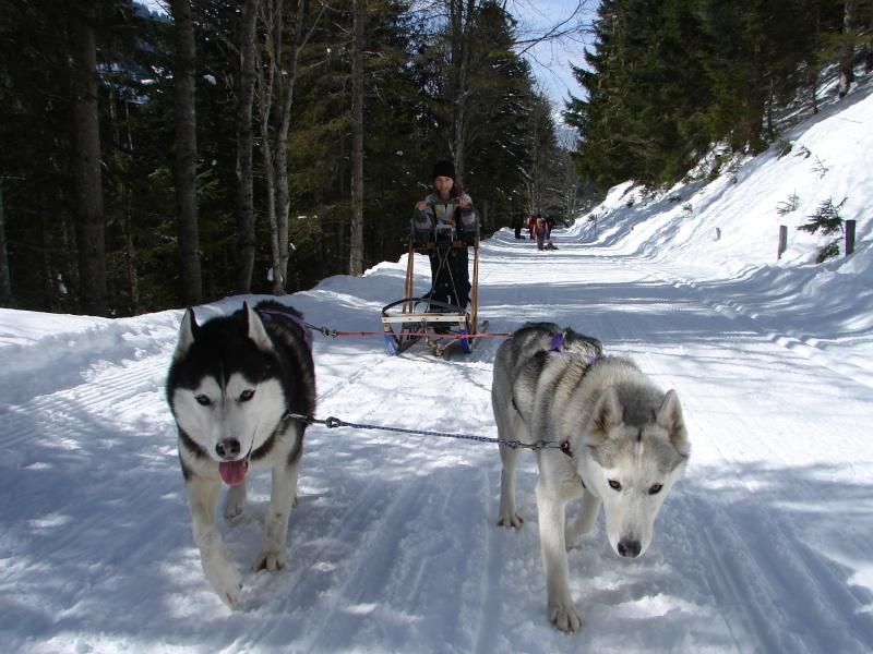 Nos loups grandissent, postez nous vos photos - Page 2 Dsc01010