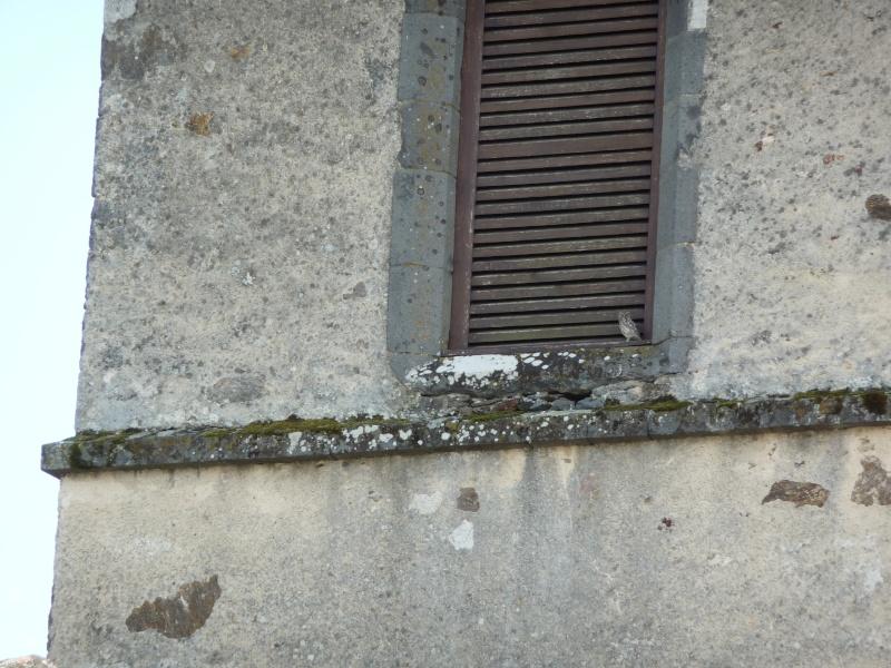 La Maison des rapaces à Chalvignac P1020313