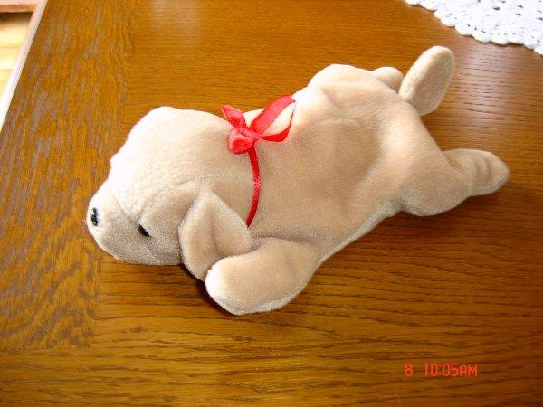 Petit chien tout doux (doudou) Petit_10