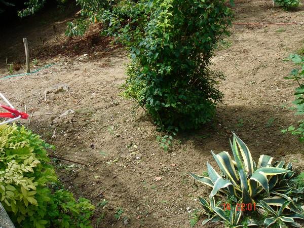"""Quelles plantes pour mon talus """"pourri"""" ? Talus_10"""