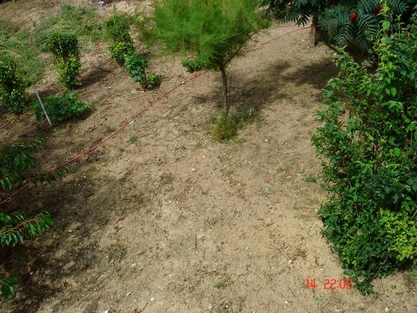 """Quelles plantes pour mon talus """"pourri"""" ? Talus_11"""
