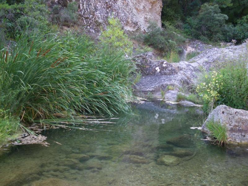 La forêt provençale Imgp0424