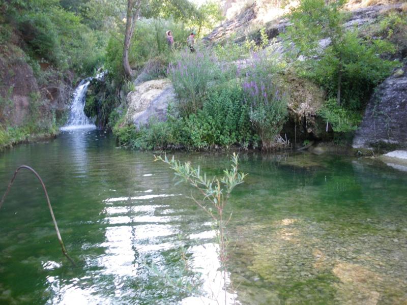 La forêt provençale Imgp0426
