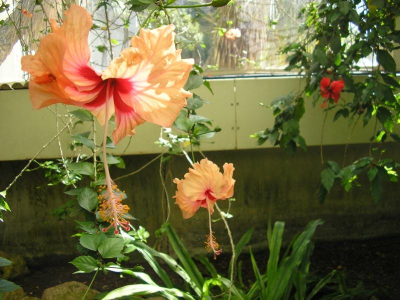 Fleurs préférées de Mehdi ? P1012017
