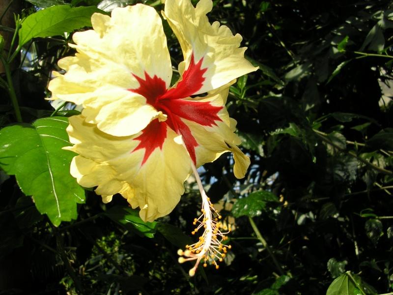 Fleurs préférées de Mehdi ? P1012018