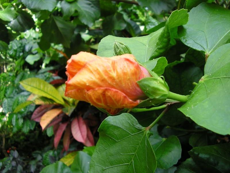 Fleurs préférées de Mehdi ? P1012025