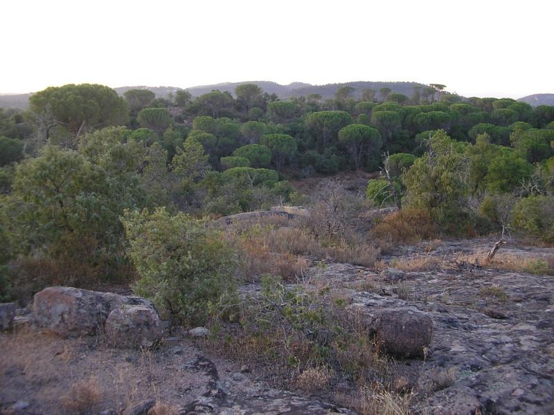 La forêt provençale P1012026