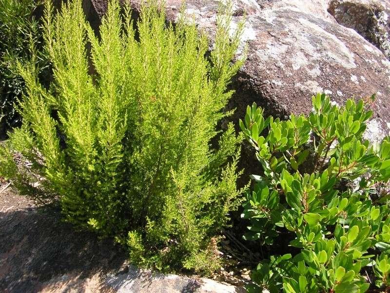 La forêt provençale P1012126