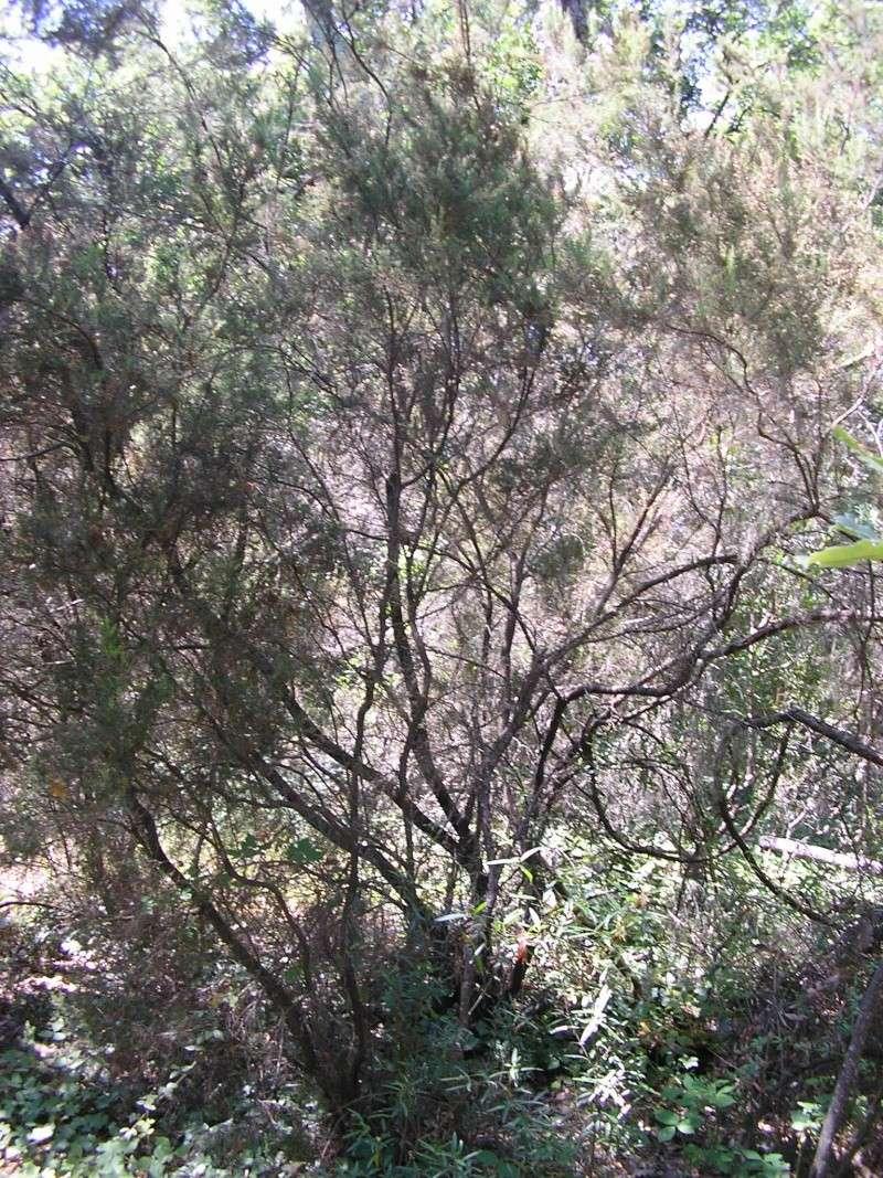 La forêt provençale Rotati11