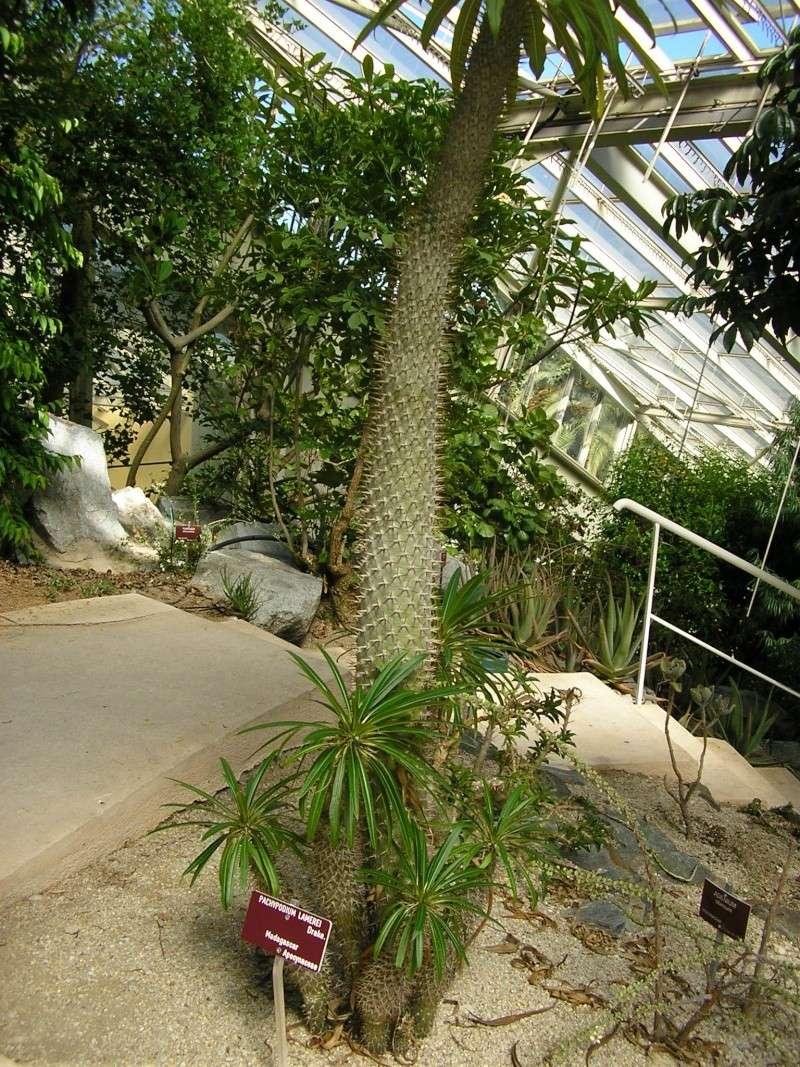 Cactées et plantes grasses du parc Phénix Rotati13