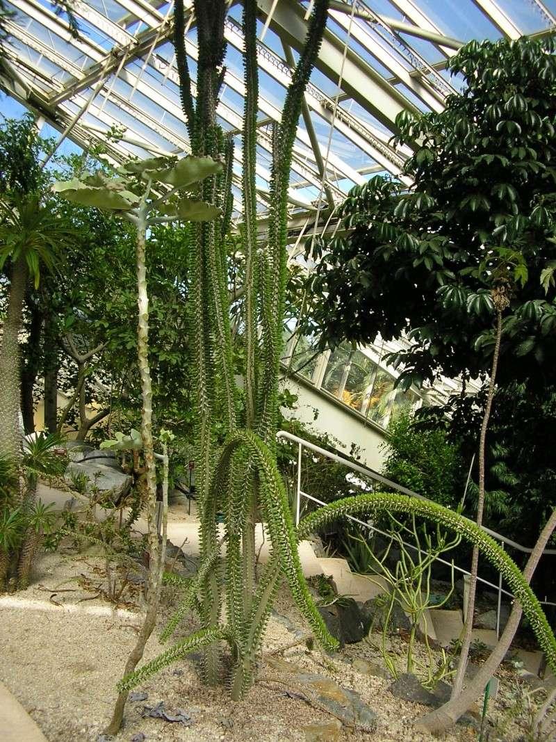 Cactées et plantes grasses du parc Phénix Rotati14