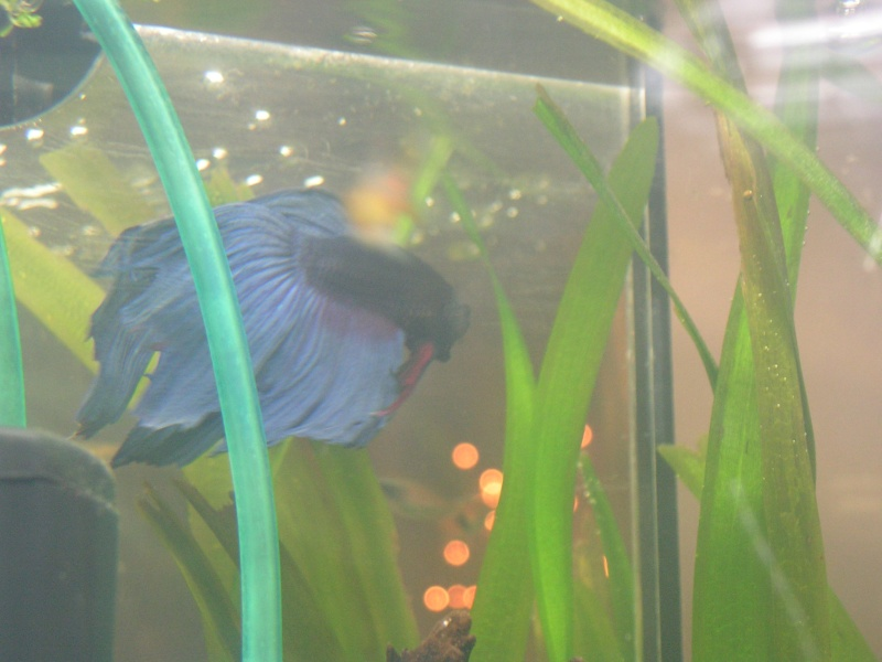 mon petit aqua Foto_p28