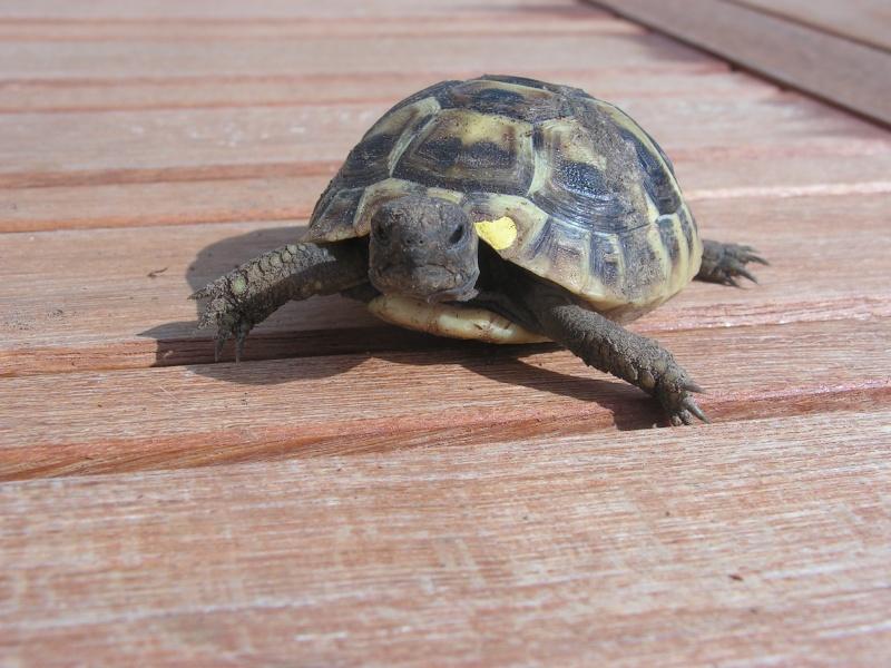 """éhéhéhéhéh  je vous presente mes bebes tortues """"zoé et lola"""" Foto_t20"""
