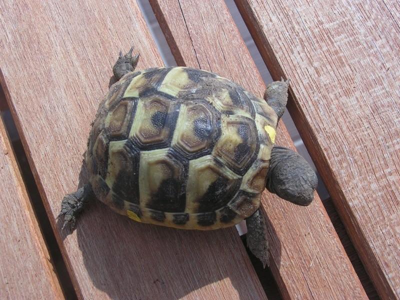 """éhéhéhéhéh  je vous presente mes bebes tortues """"zoé et lola"""" Foto_t22"""