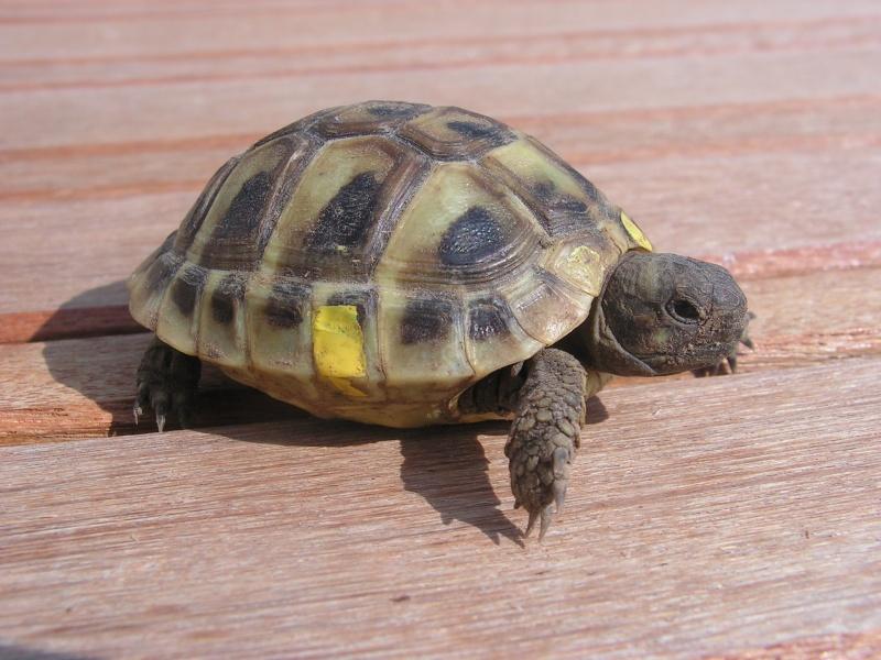 """éhéhéhéhéh  je vous presente mes bebes tortues """"zoé et lola"""" Foto_t23"""