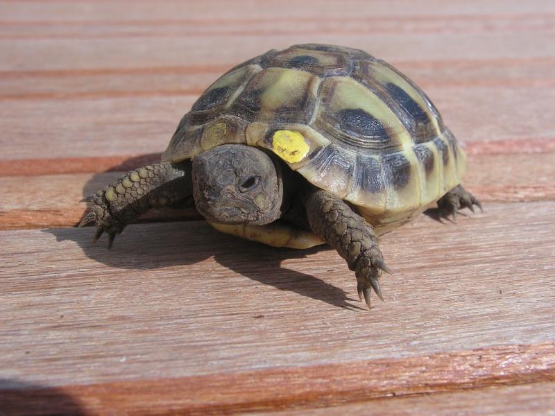 """éhéhéhéhéh  je vous presente mes bebes tortues """"zoé et lola"""" Foto_t24"""
