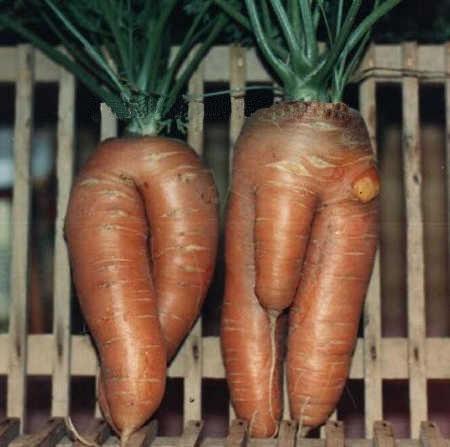 carottes bizares Carott10