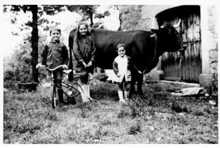 Du lait cru entier en libre service à Rodez Vache_10