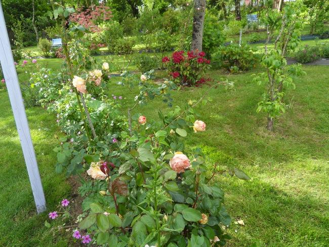 le jardin de danyland 030-sd10