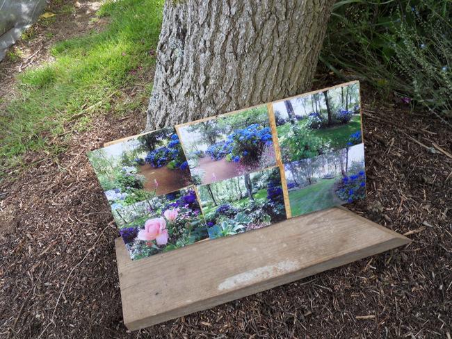 le jardin de danyland 042-sd10