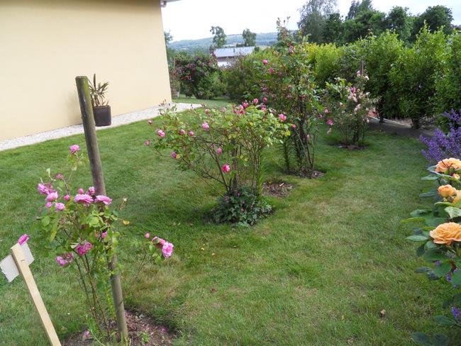 le jardin de danyland 101-sd12