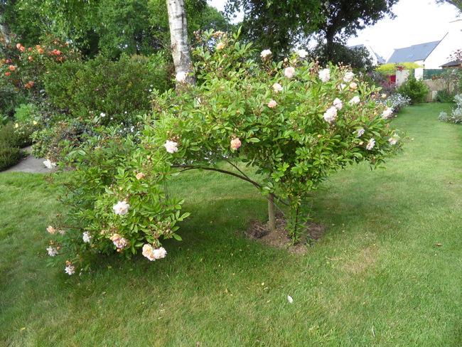 le jardin de danyland 116-sd10