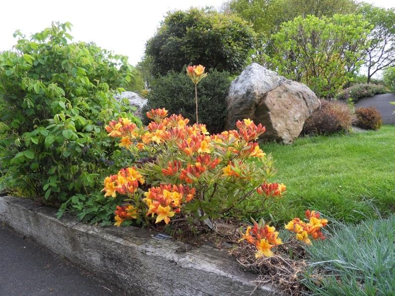 le jardin de danyland Sdc18712