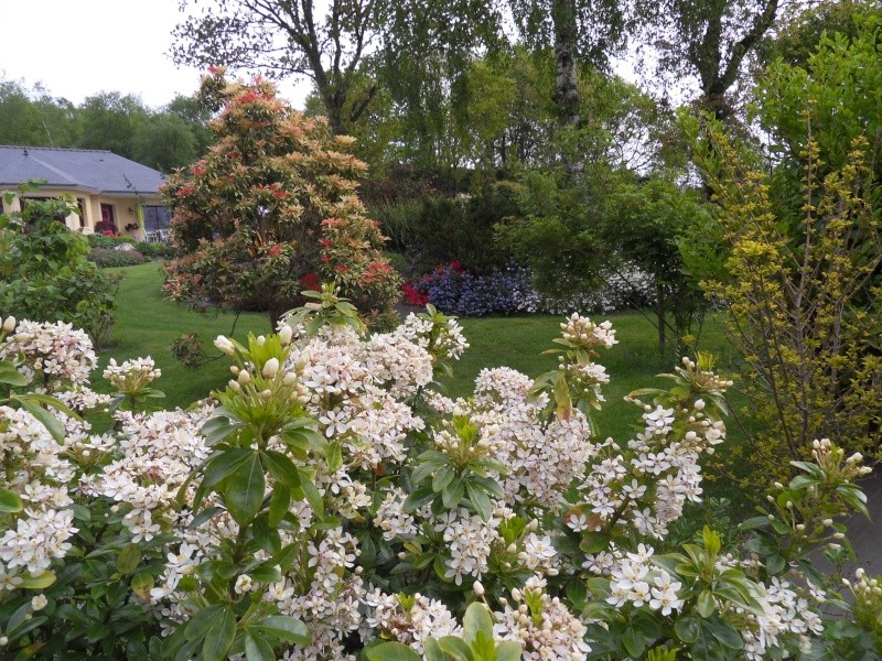 le jardin de danyland Sdc18713