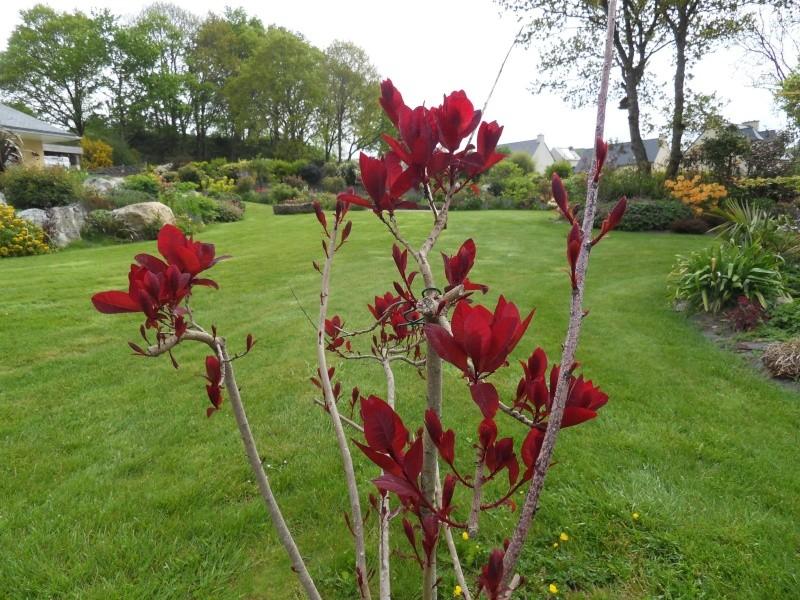 le jardin de danyland Sdc18714