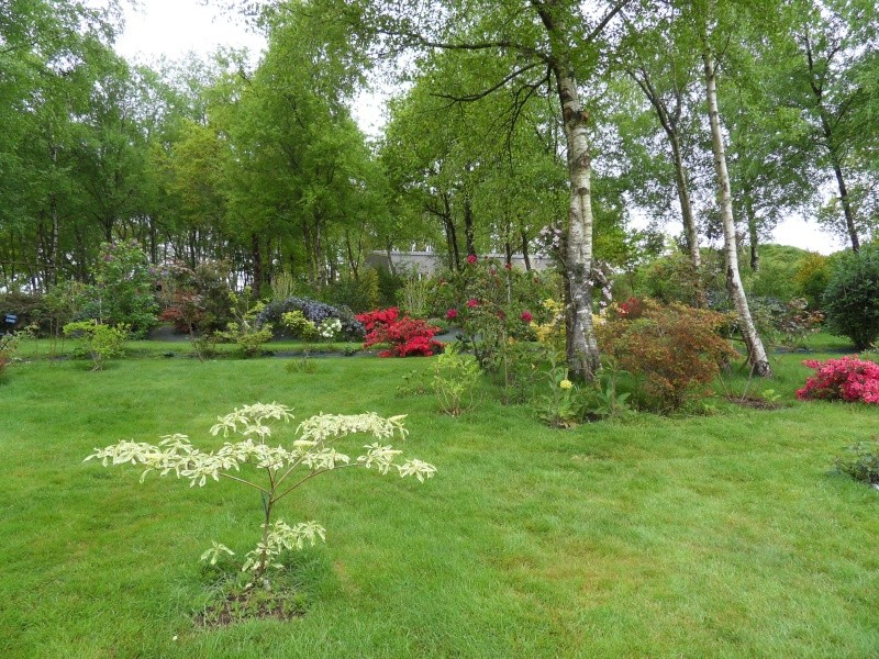le jardin de danyland Sdc18813