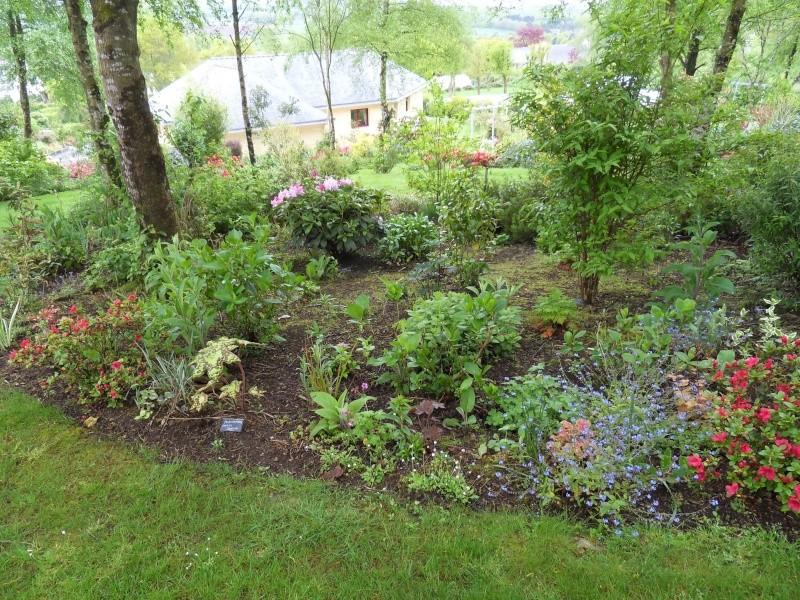 le jardin de danyland Sdc18910